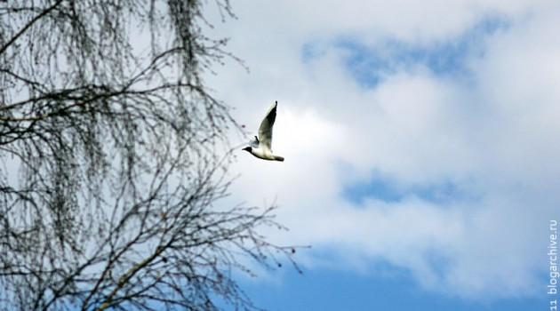 Летящая чайка.