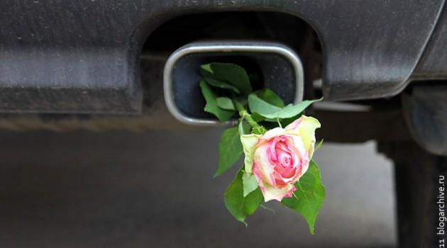 Роза в выхлопной трубе.