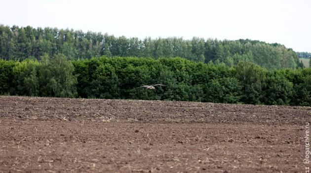 Летящий над землёю аист.