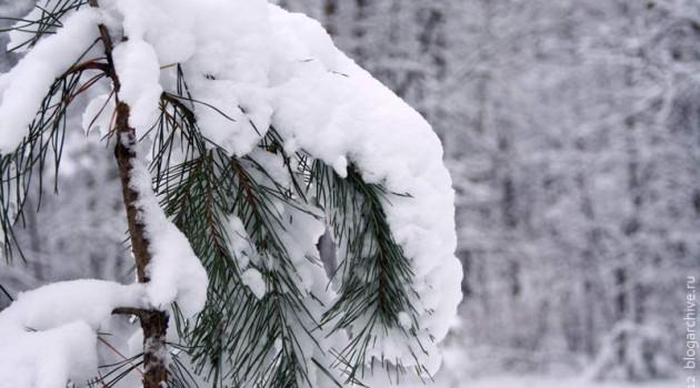 Зима в Подмосковье. 2012 год.