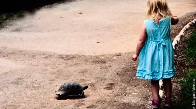 Девочка демонстрирует черепахе свои способности. Греция. 2012 год.