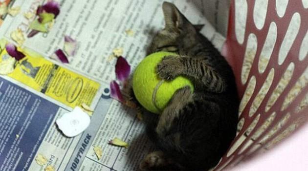 Коты, вот, тоже любили портить дефицитные теннисные мячи.