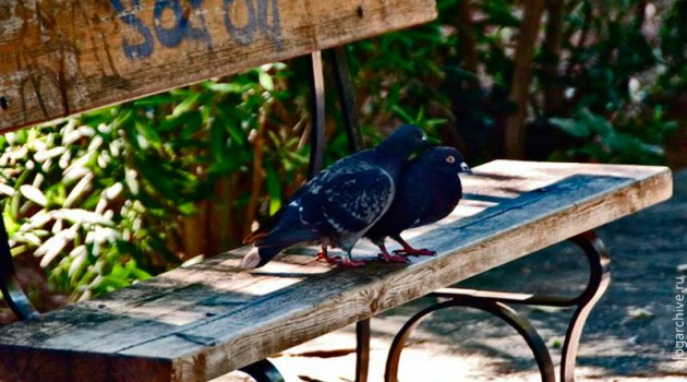 Влюбленные голуби на обшарпанной скамейке. Греция. 2012 год.