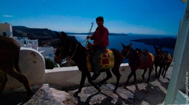 Ослиный караван. Греция. 2012 год.